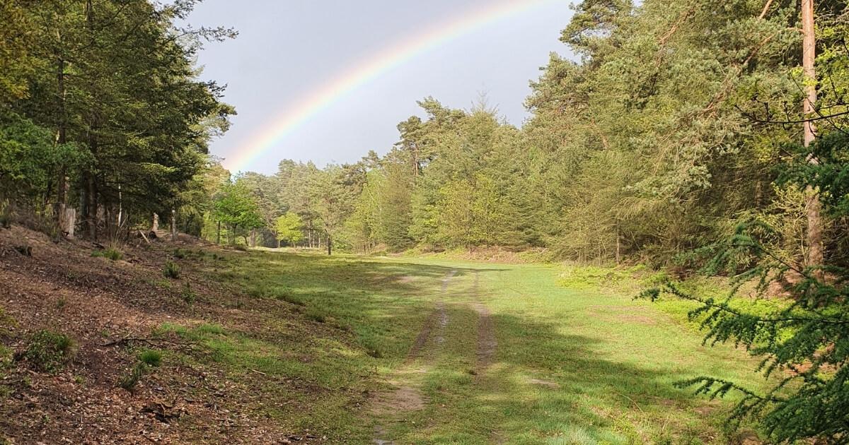 Eén jaar ondernemen regenboog